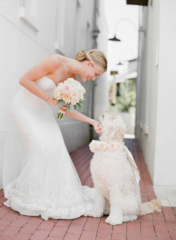 include your dog into your wedding day
